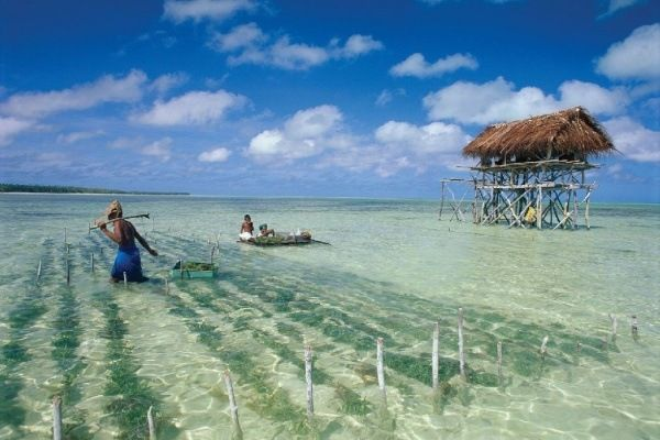 Kiribati Travel Pinterest Kiribati Island Christmas Island