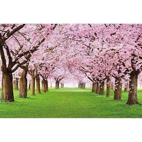 Fotomural 350x245 Cm Papel Tejido No Tejido Fotomurales Papel Pintado 350x245 Cm Naturaleza 10110903 19 Blossom Trees Cherry Tree Spring Wallpaper