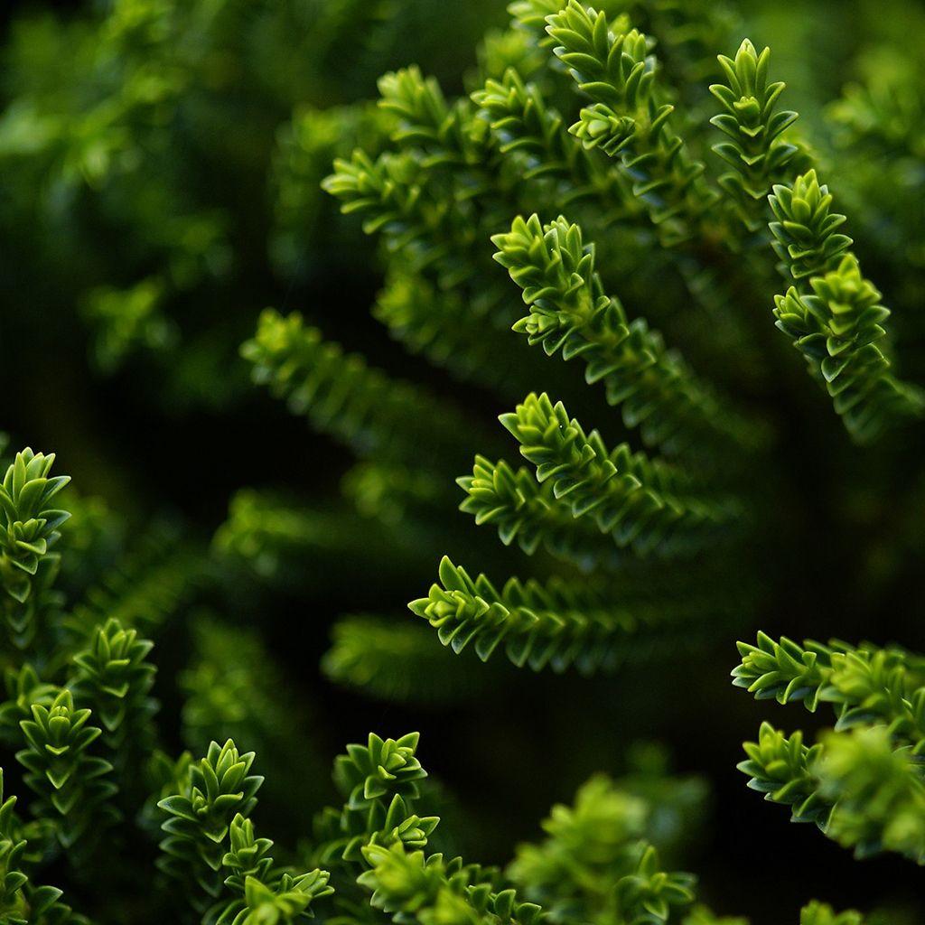 Green Plant iPad Wallpapers Plant wallpaper, Nature