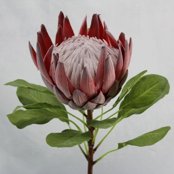Superior Quality Artificial King Protea Flower Large Amp Very Realistic Flocked Flower Head With An Imita Australian Native Flowers Protea Flower Protea Art