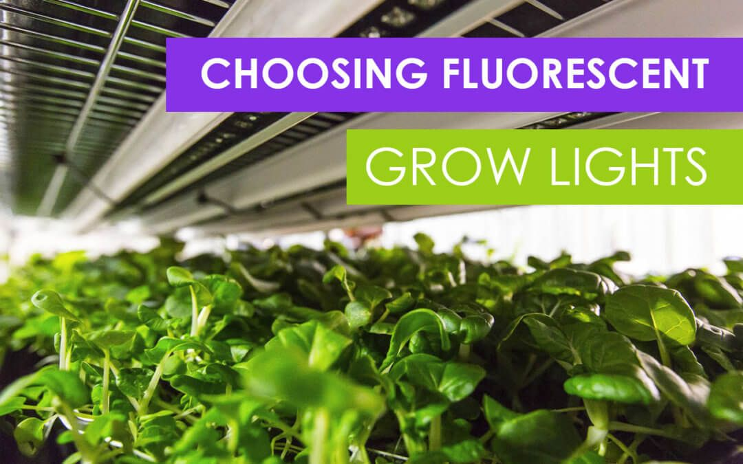 How To Choose Fluorescent Grow Lights For Your Farm Grow 400 x 300