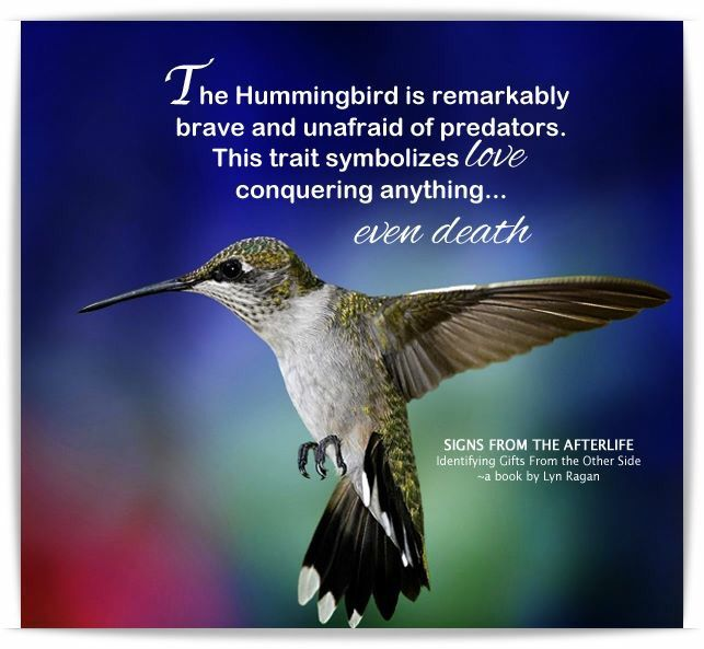 Hummingbird Signs From The Afterlife Signs From Heaven The