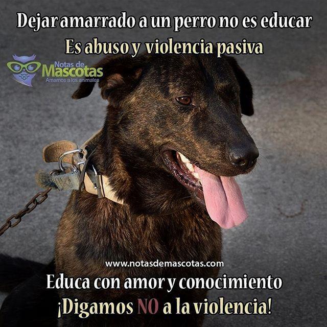 Siguenos En Instagram Mascotasdomesticas Mascotas Perros Frases Mascotas Frases