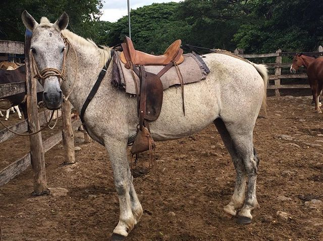 Instagram media by mlaurengo - Costa Rica • Pozo Azul 🐴#costarica #travel #capture #explore #caminando #wildlife #pozoazul #naturaleza #nature #caballito