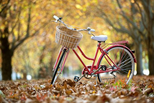 Autumn 2013 Canberra By Sangphotography On Flickr Bicycle Wallpaper Red Bicycles Bicycle Bicycle wallpapers images photos