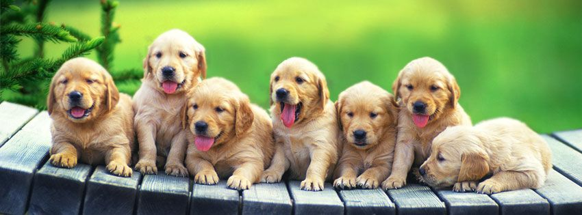 Make Facebook Timeline Cover With Your Favorite Pet Dog Or Puppies