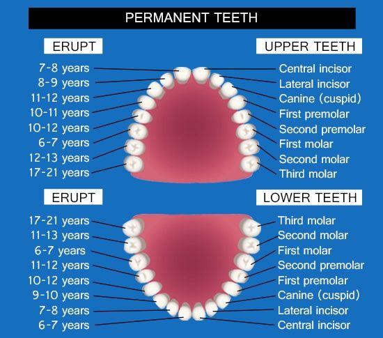 Кога да очакваме Феята на зъбките?