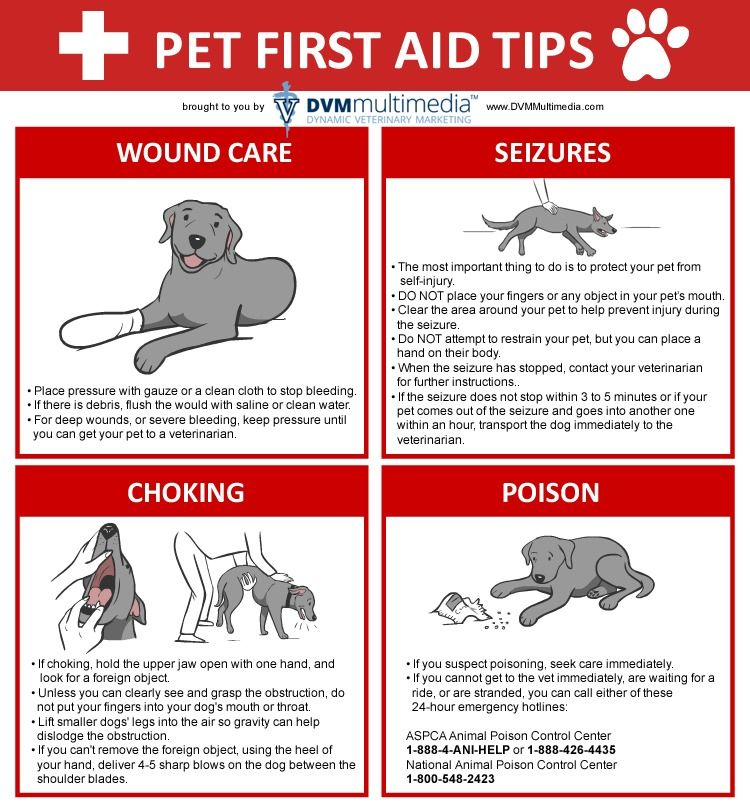 Pets Dog First Aid Tips Wound Care Seizures Poison Choking Pets First Responsible Pet Owner Pet Hacks