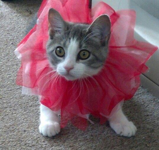 Miss Debbi lol too cute.