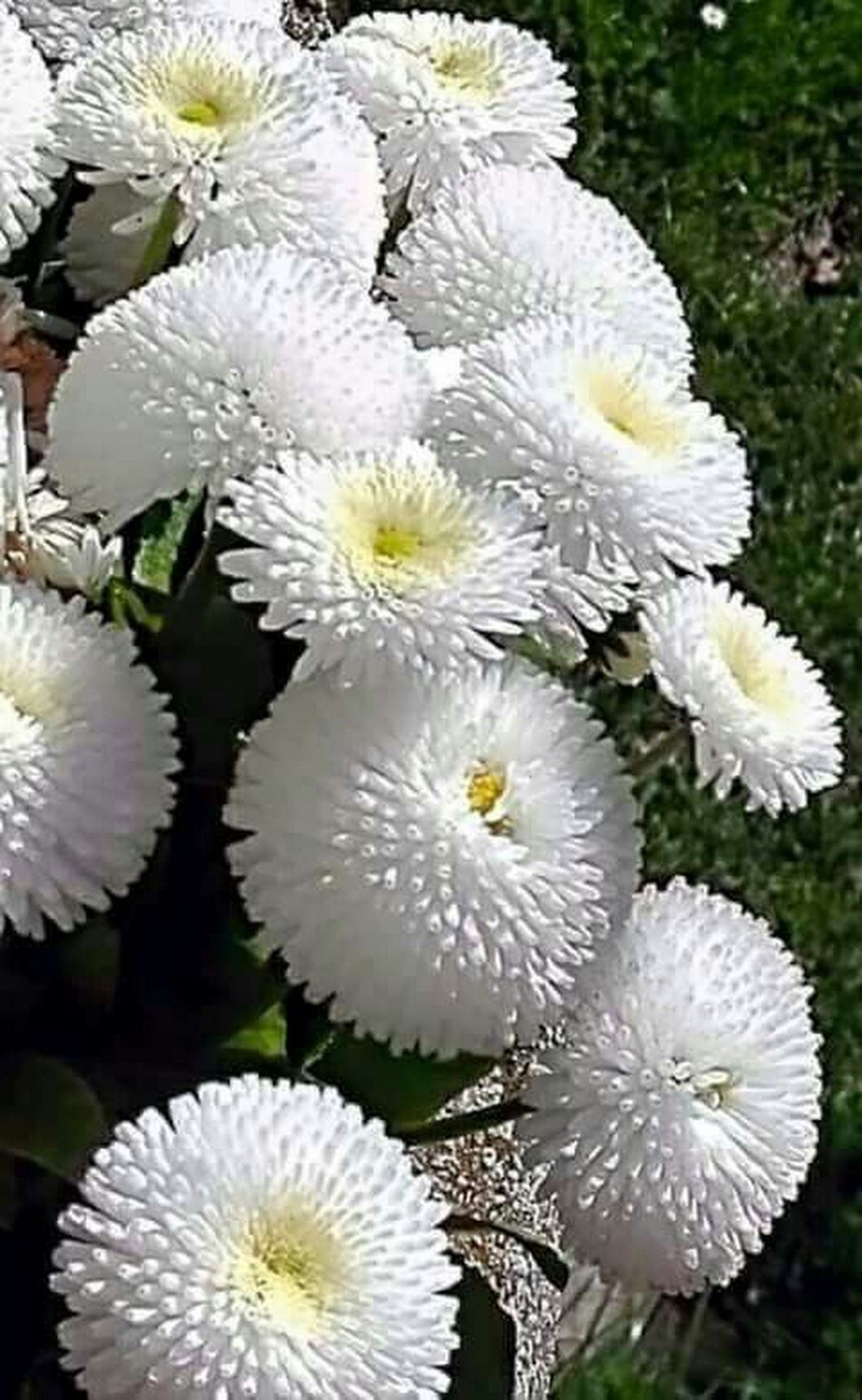 Pin By Cheryl Watkins On Flower Arrangements In 2018 Pinterest