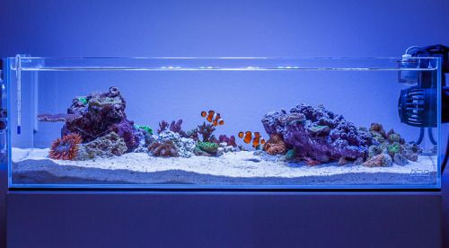 Reef aqua design daletu s ada 60f shallow for Ada fish tank
