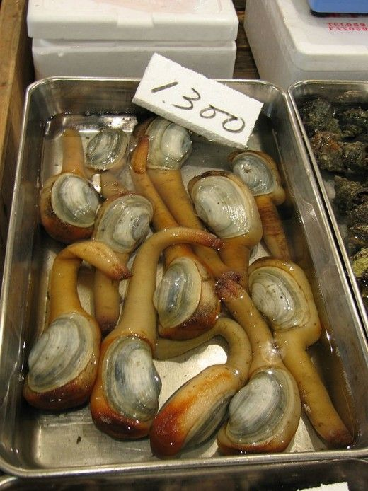 25 Most Amazing And Unusual Animals On Earth Clams Food