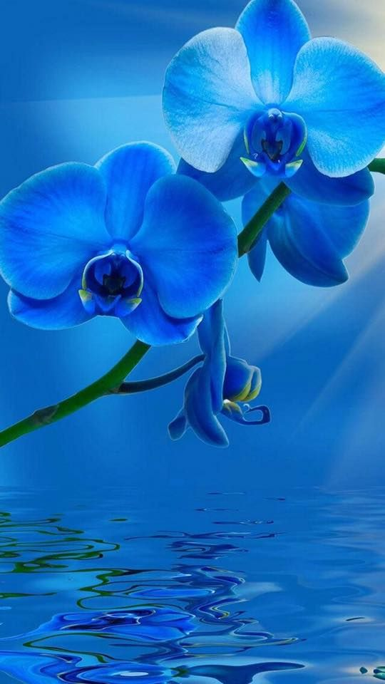 Pin By Nessy On Adverts Flower Wallpaper Blue Flowers Wallpaper