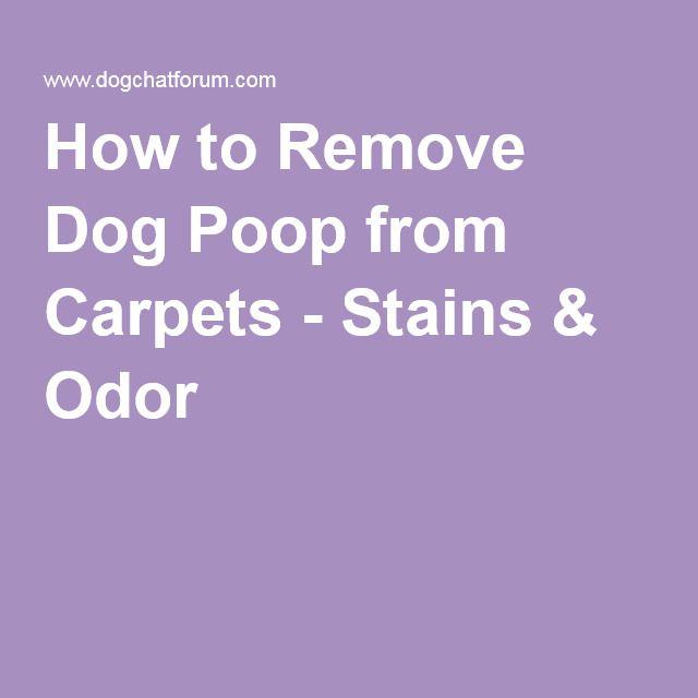 Dog Has Diarrhea On Rug: How To Clean Dog Diarrhea From White Carpet