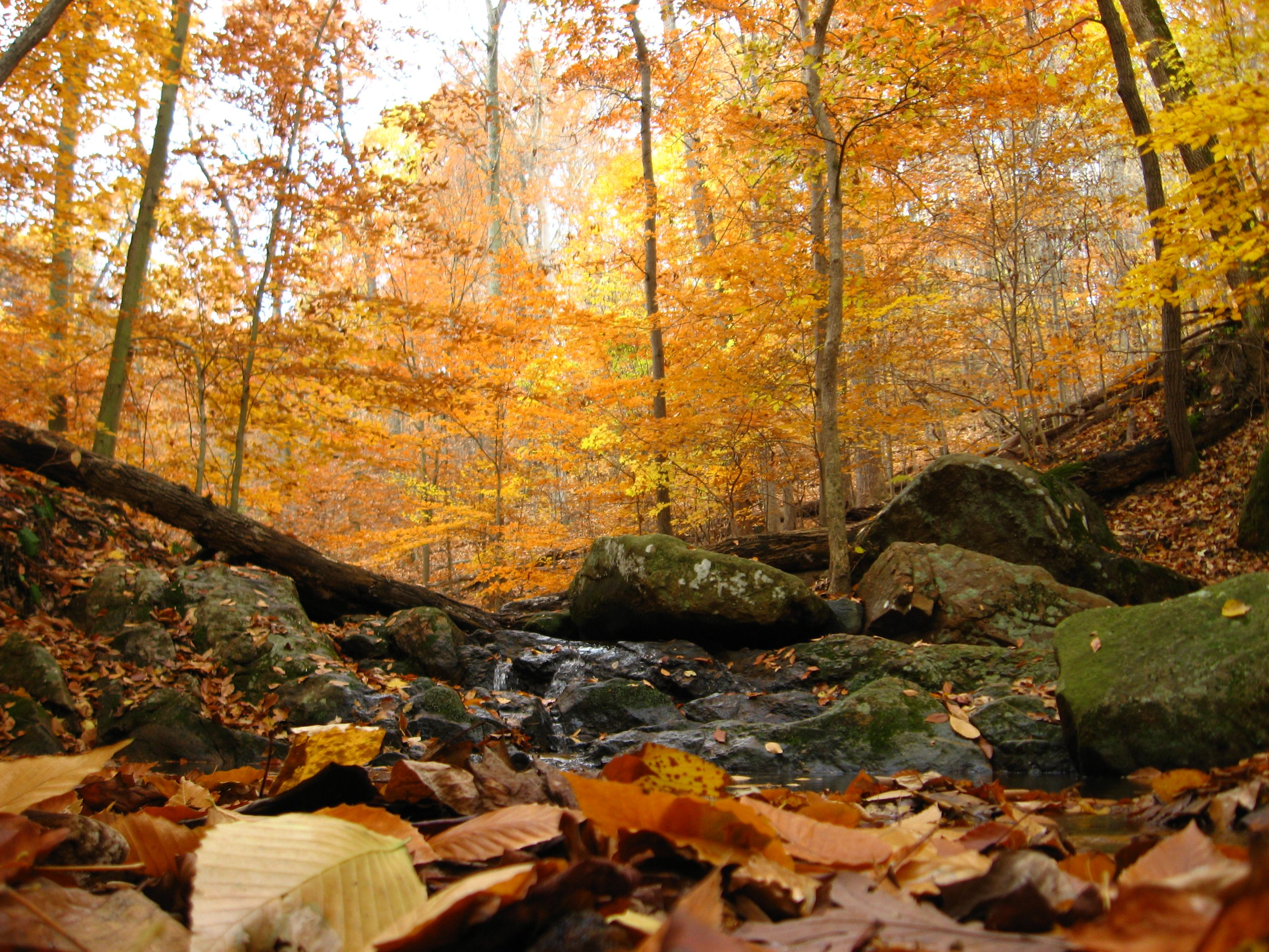 Fall In Maryland Photos Diagrams Topos Maryland Scenery Autumn Scenery