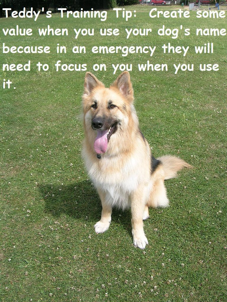 Teddy's Top Training Tip 26/01/2017 (With images) Dog