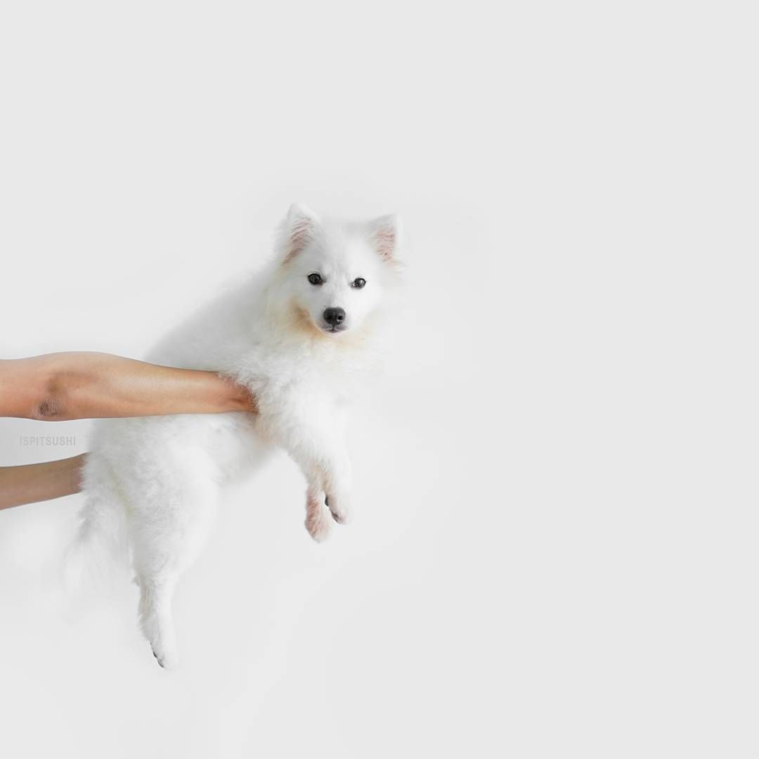 happily little critters Pinterest Animal Pup and Dog