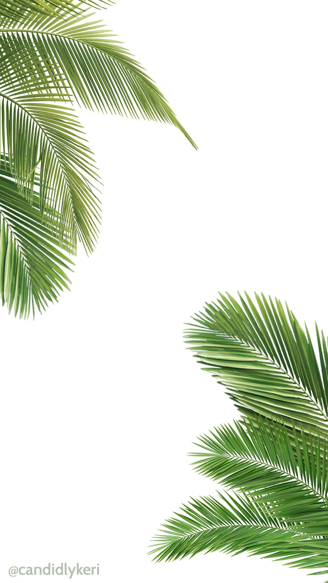 Palm tree and white wallpaper free download for iPhone android or desktop background on the blog!