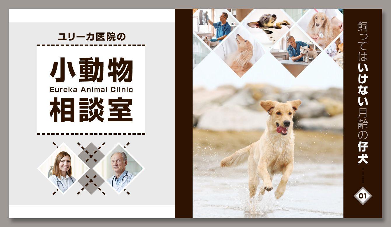 動物病院のバナー 習作 Pet Clinic Animals Photo