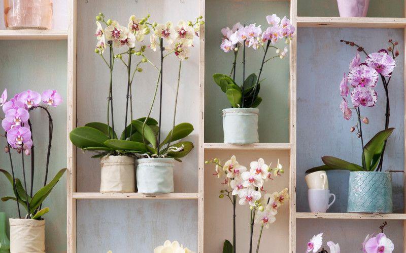 Uprawa Doniczkowych Paproci W Mieszkaniu Poradnik Pielegnacji I Opis Najpopularniejszych Gatunkow Zielony Ogrodek In 2021 Plants Flowers Decor
