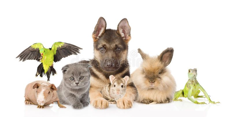 Group Of Diverse Animals Isolated On White Background Ad Animals Diverse Group Background White Ad Animals Animal Logo Love Your Pet