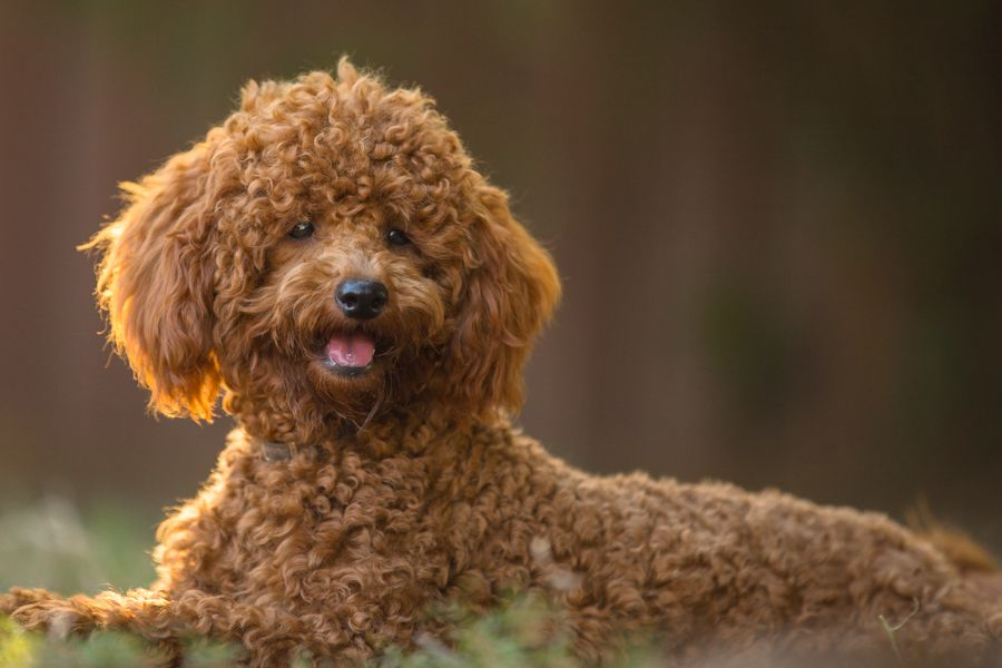 I Love Photographing Dogs With Warm Sun Light Streaming Their Coat