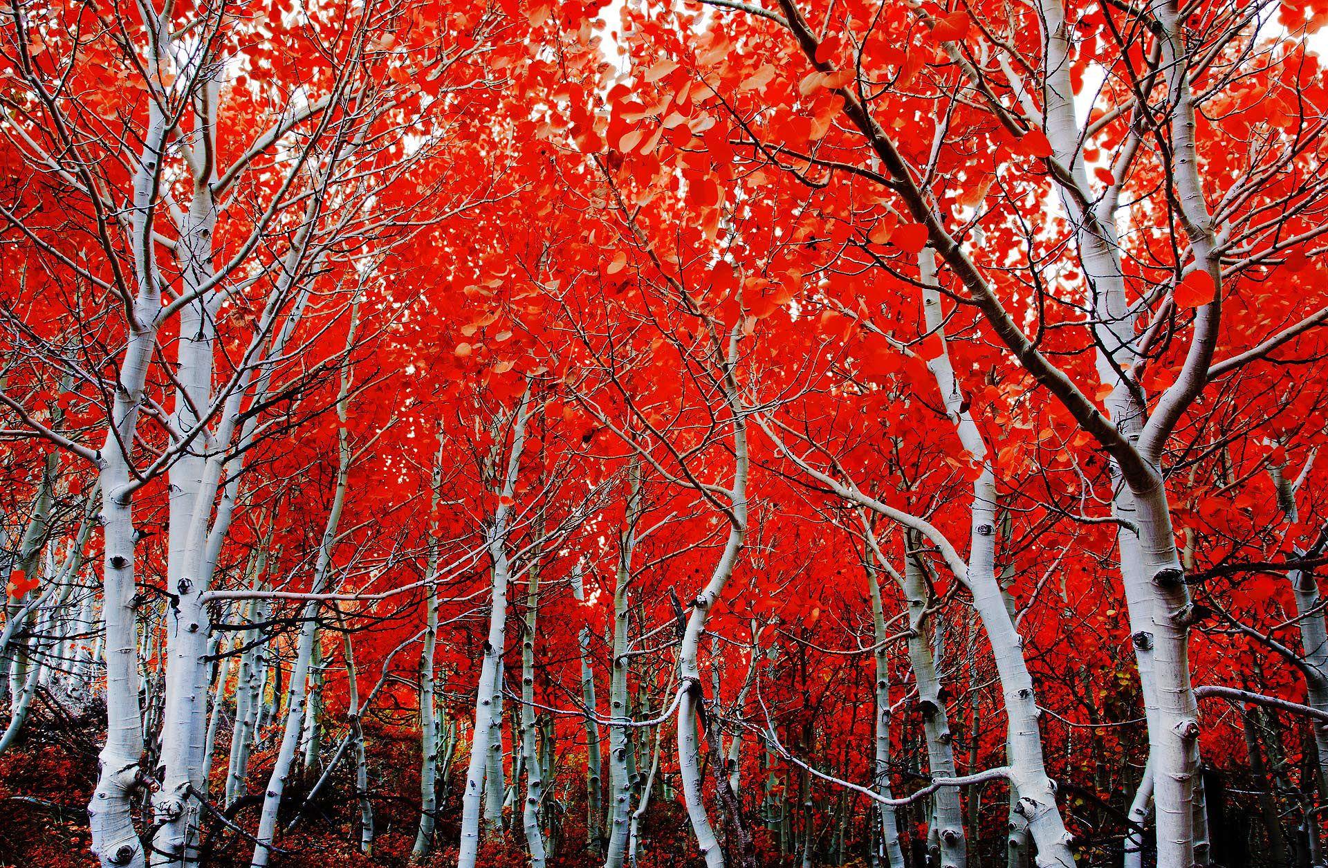 Sierras Cali Beautiful Landscape Photography Autumn Landscape Tree Photography