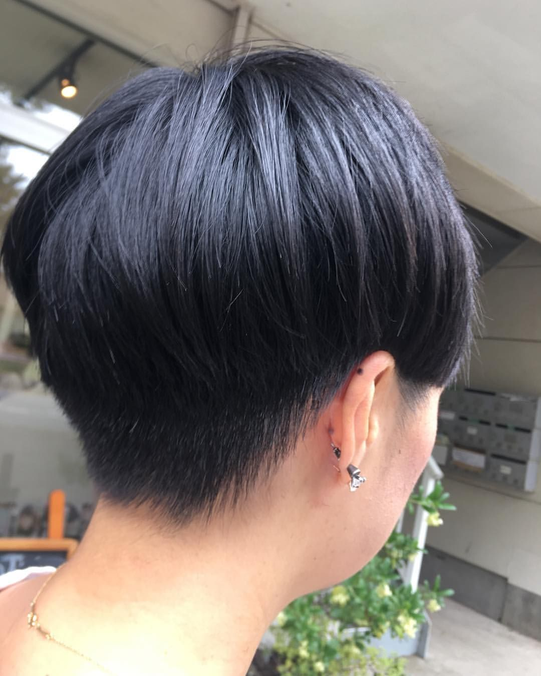 Pin On Shorthair