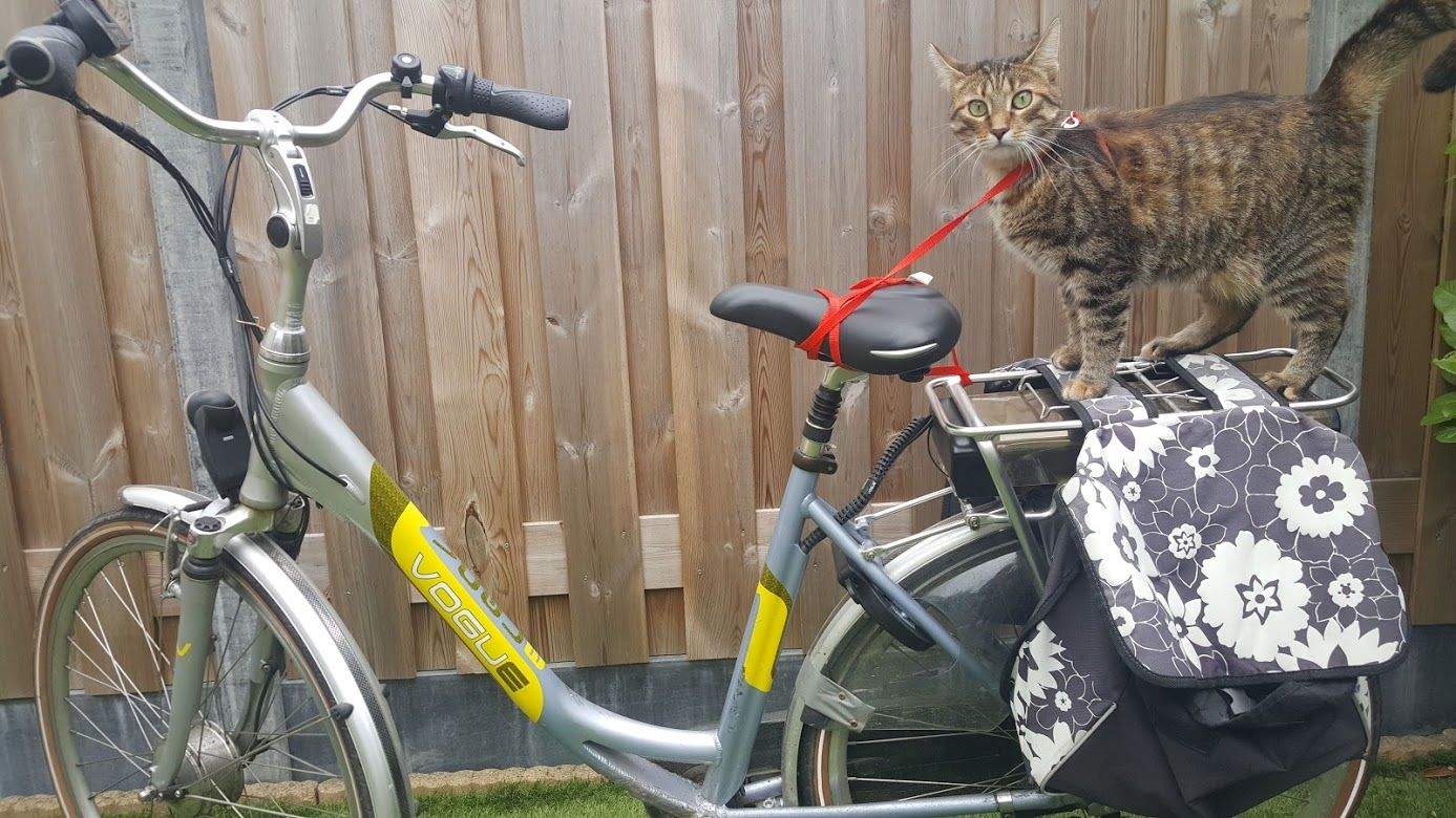 A cat is standing on a luggage carrier of the bicycle. It