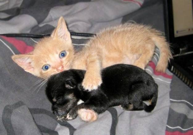 Awwww This Is My Puppy Kittens And Puppies Cat Cuddle Cute Animals