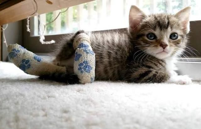 She S Missing Two Paws But Can Move Faster Than Other Kitties Love Meow Animals Kittens Cutest Cats And Kittens