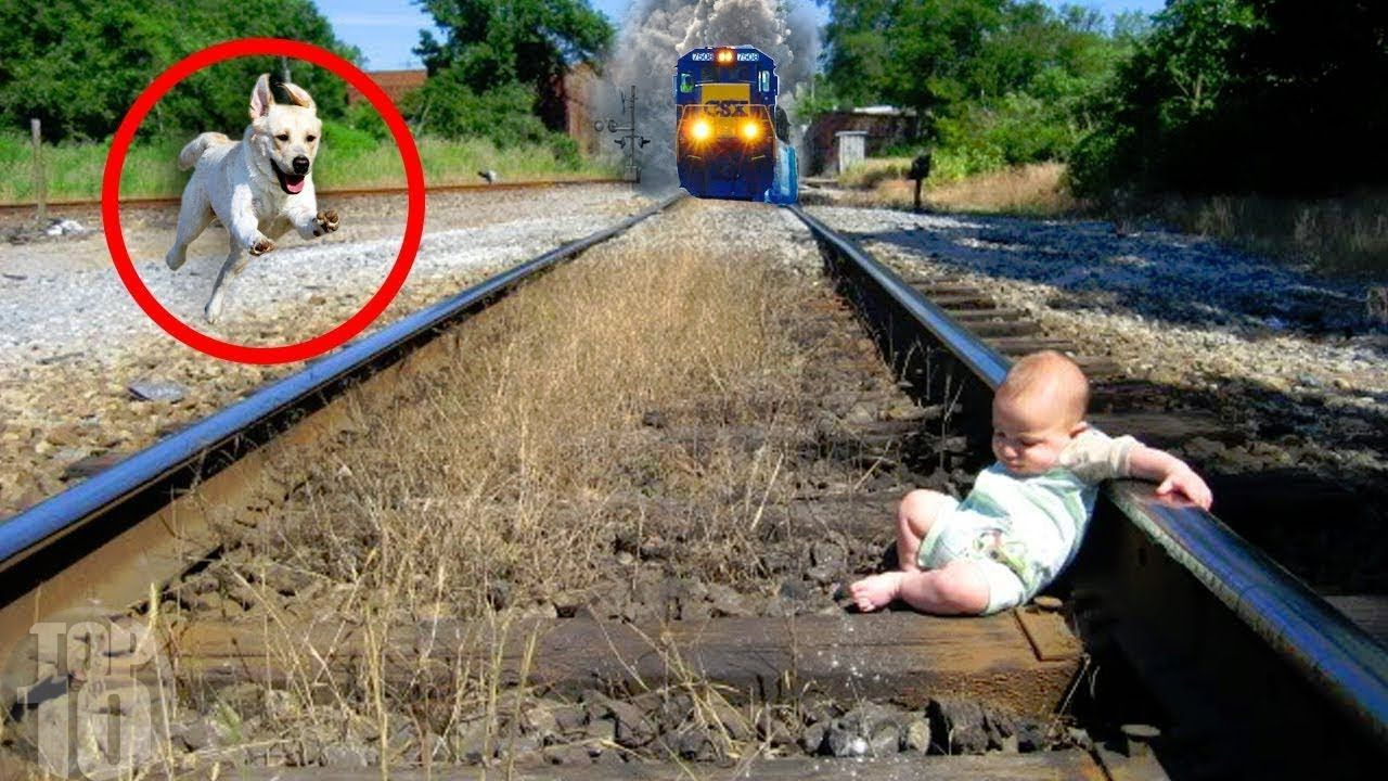 10 Unbelievable Animals Who Saved People S Lives Funny Dog