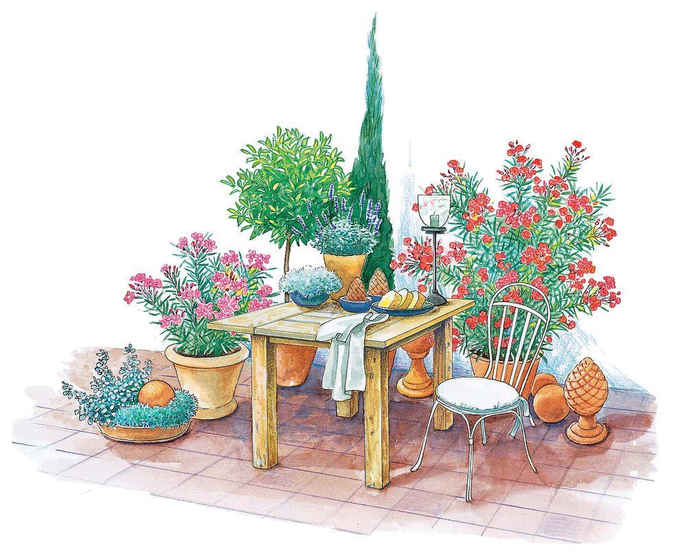 Mediterrane Kübelpflanzen Sorgen Für Urlaubsflair Auf Terrasse Und Balkon U2013  Erinnerungen An Vergangene Reisen Werden Wach