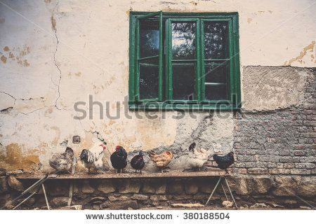 vintage effect picture of a village environment with chicken