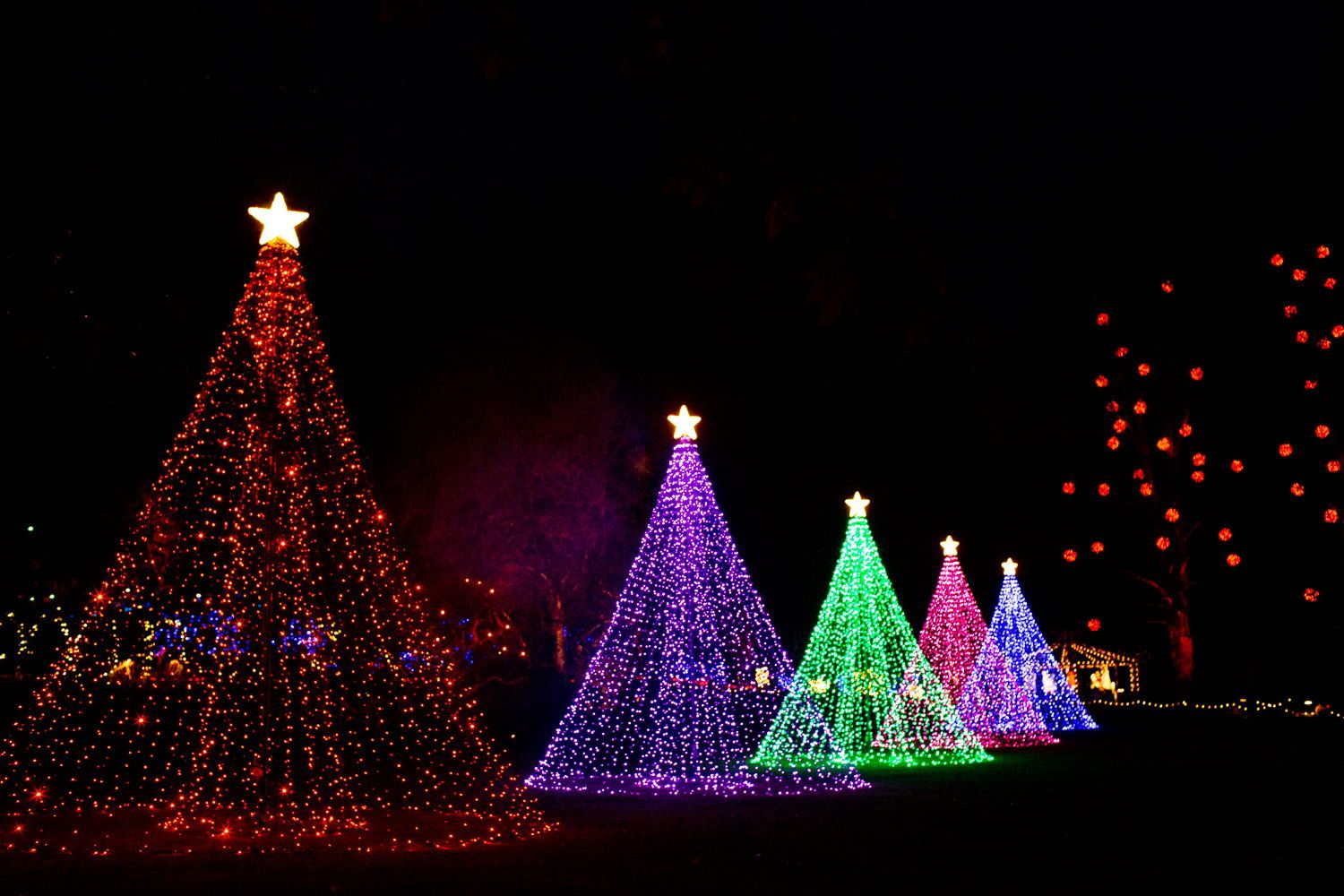 5 Butchart Gardens Christmas Things To Know BEFORE You Go (2020) in 2020   Butchart gardens ...
