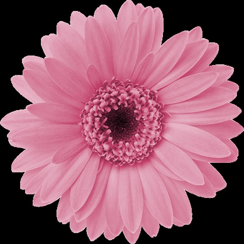0 Aff04 597a0427 Xl 798 800 Flower Clipart Flowers Flower Art