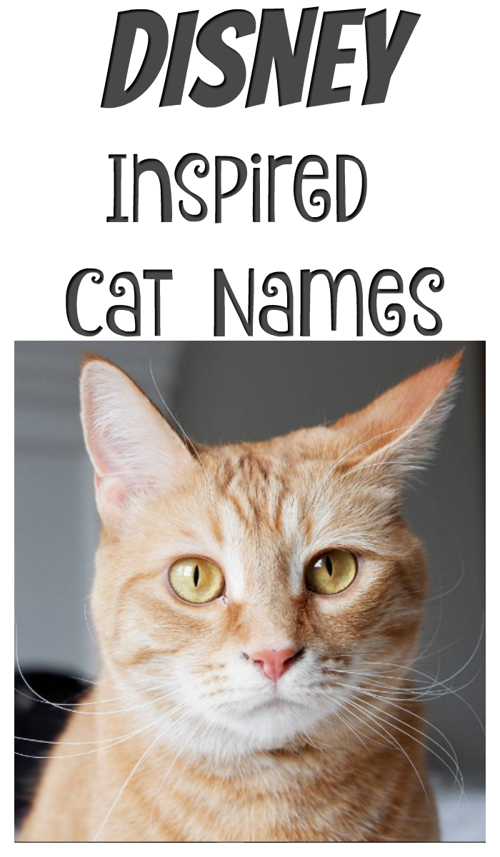Disney Inspired Cat Names Disney pet names, Disney cat