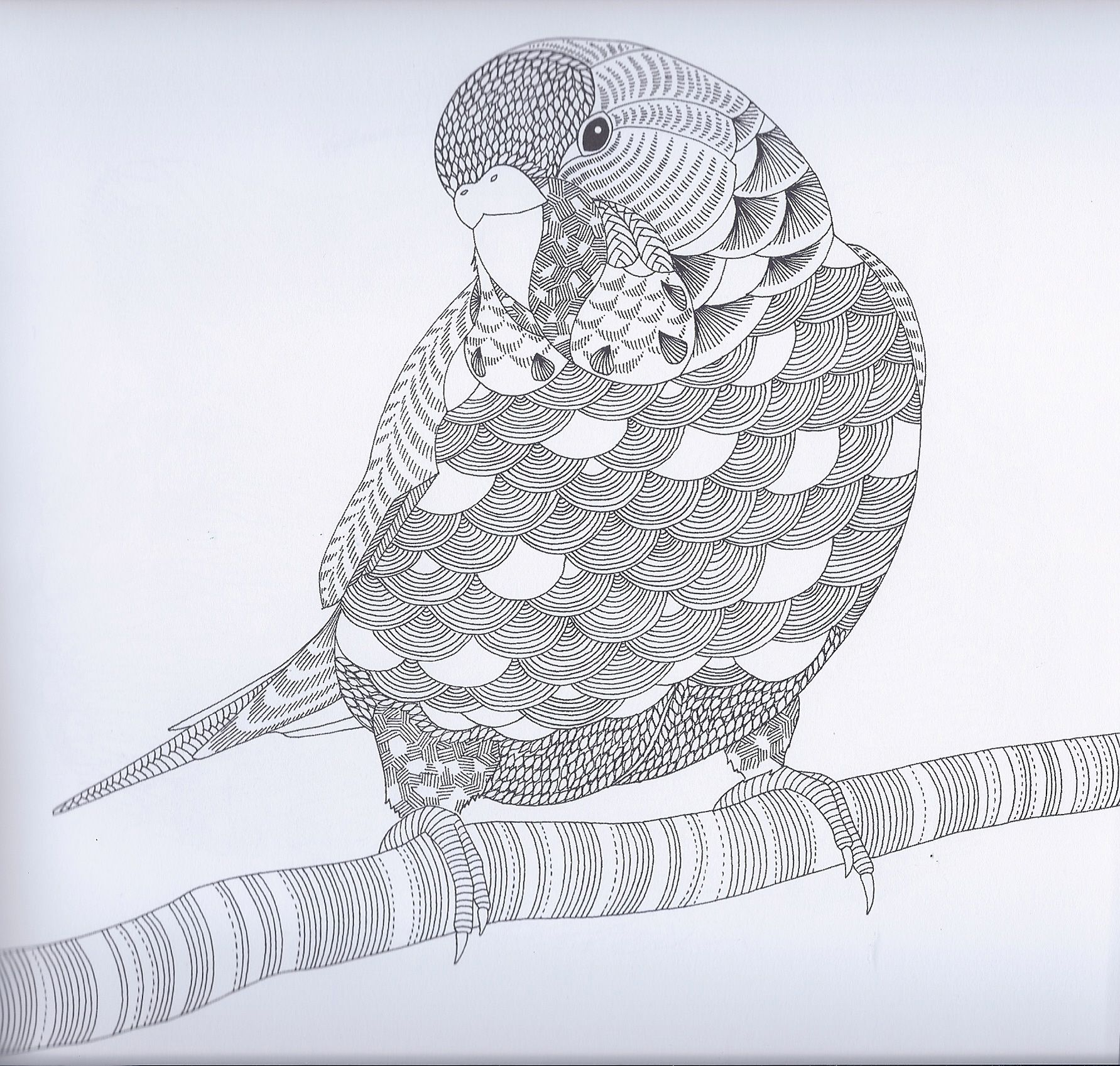 Parkiet Papagaai Parkiet Kleuren Zentangle