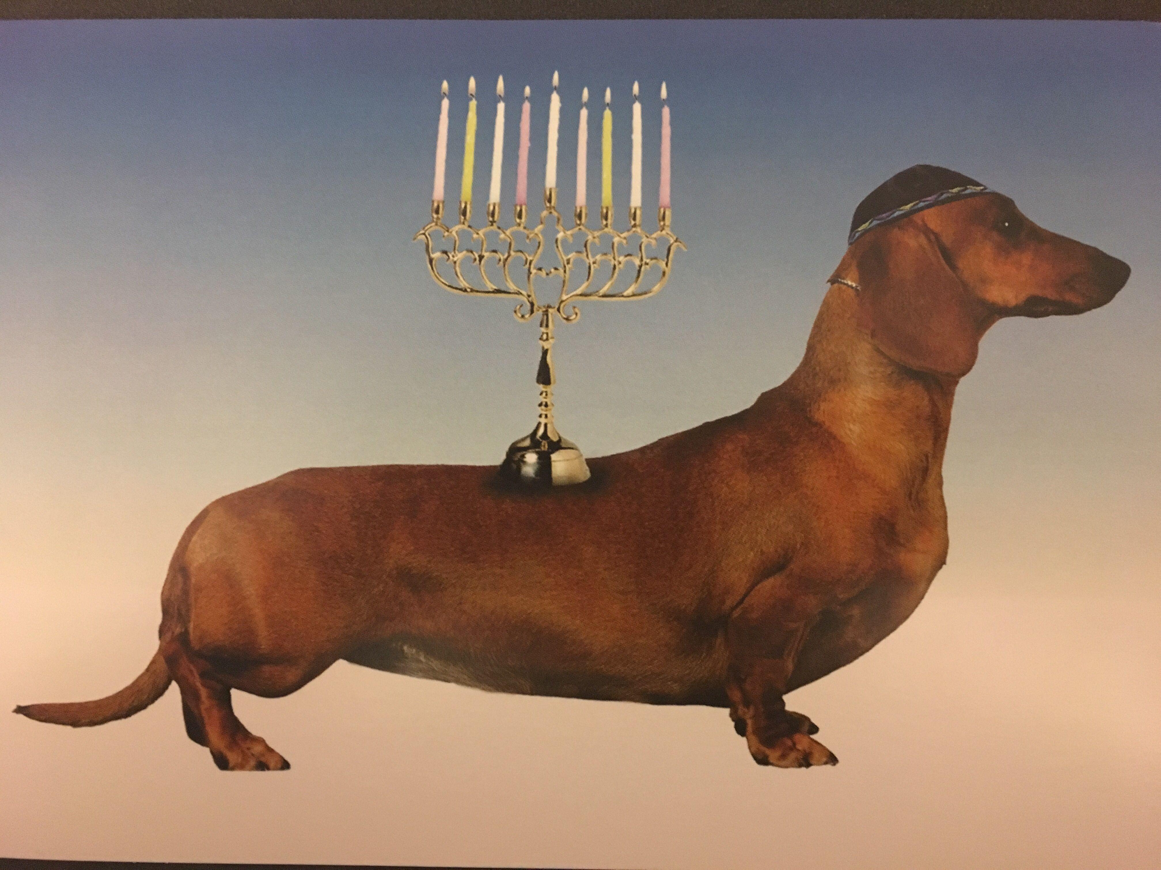 Pin by E.C. Smith on Iris Love Novelty lamp, Lamp, Decor
