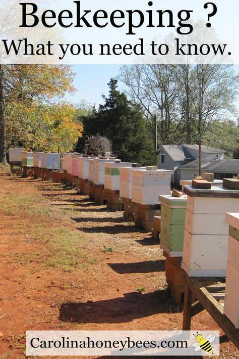 Beekeeping - things to consider before you start.  Carolina Honeybees Farm