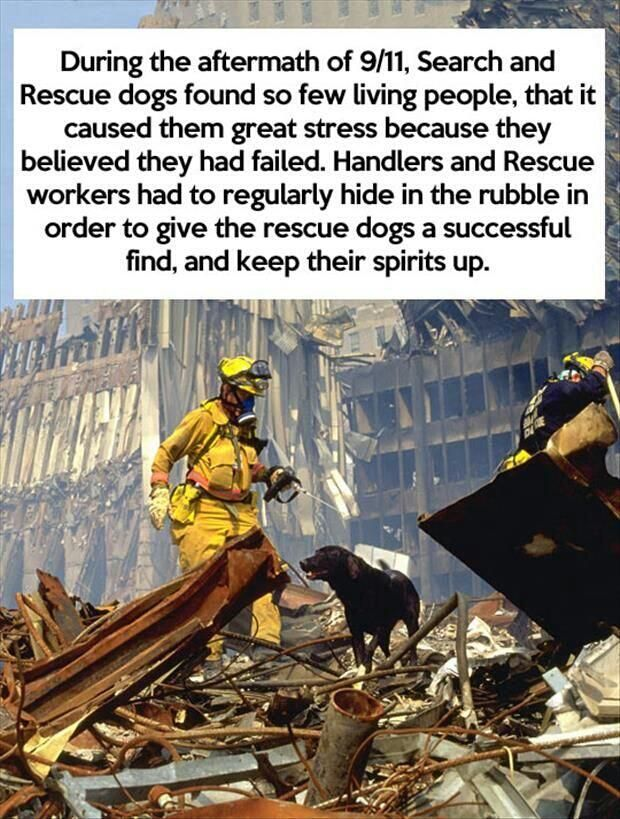 9-11 search and rescue dogs. Very sad. pic.twitter.com/tjaS55bjzW