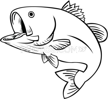 Grouper Fish Coloring Pages Images
