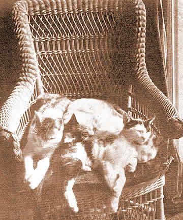 "Mark Twain's cats ""Fast Asleep""  photo by Elmira photographer  Elisha M. VanAken, 1887"