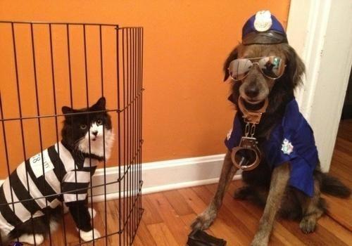 Homemade Police Costume Ideas Animal Halloween Costumes