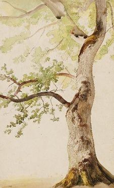Caspar Scheuren Baum Zeichnung Wasserfarben Portraits