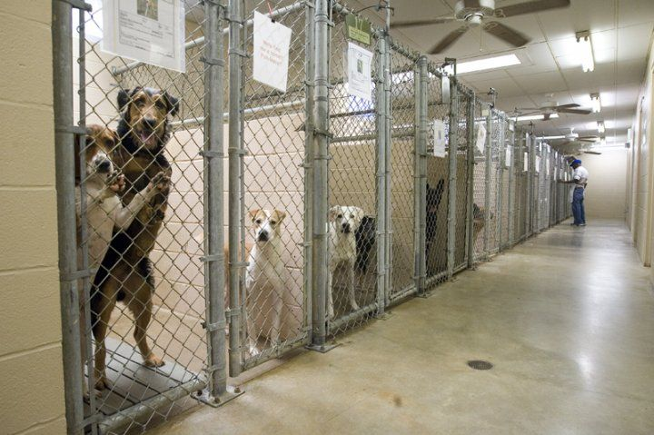 adopt a dog from a shelter..