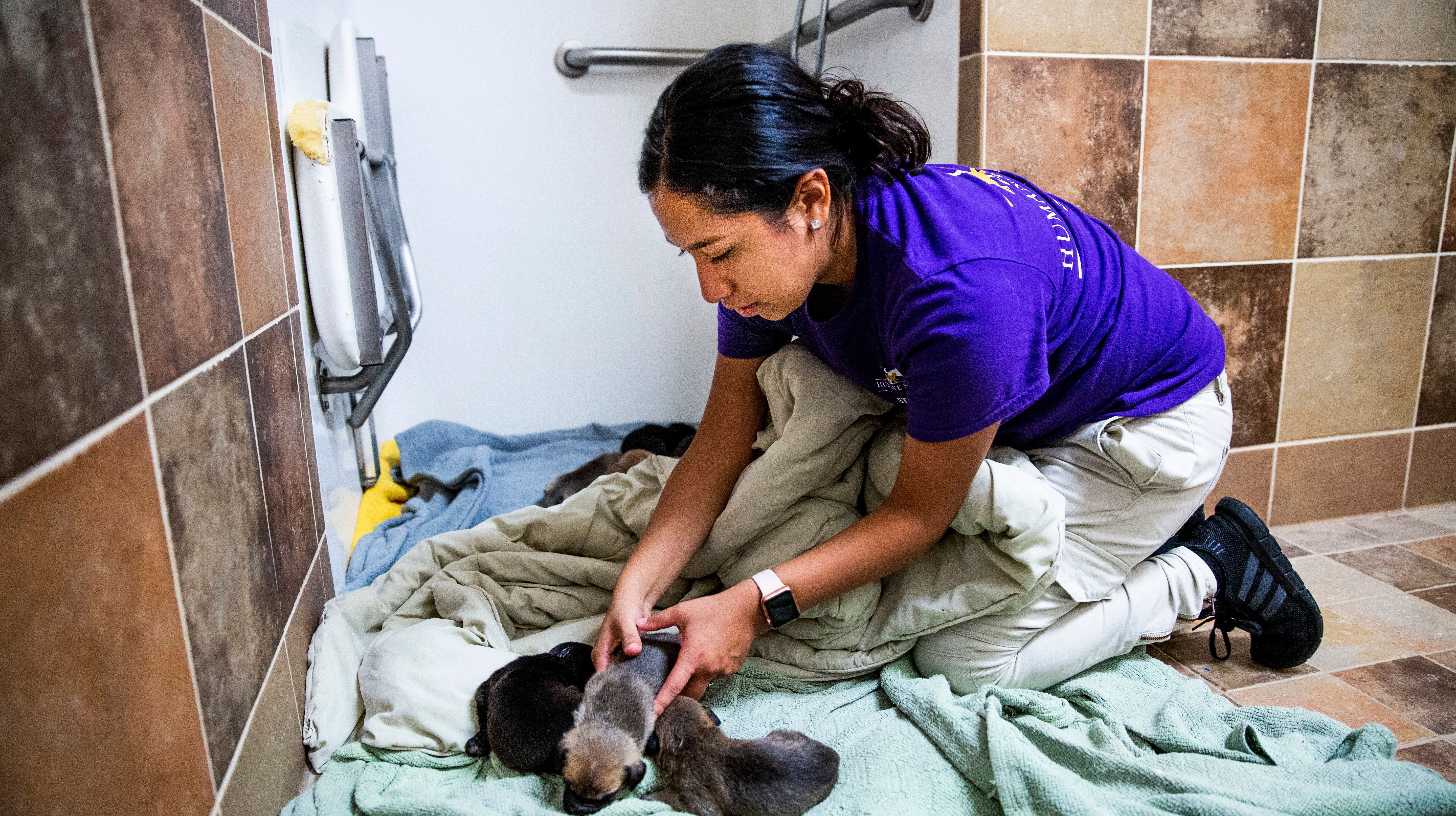 Thirty-sevendogs and nine puppies in the path of Hurricane Michael were rescued Tuesday by the Humane Society Naples.