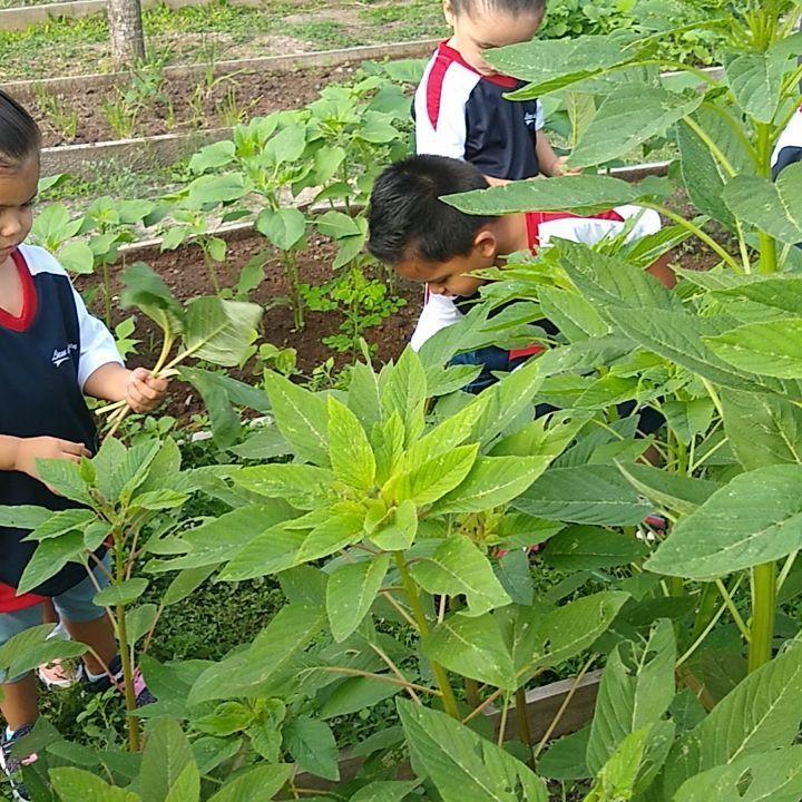 CURSOS especializados para #colegios ,📞📞📞 EL #AMARANTO  considerado como un #superfood #ancentral ,...