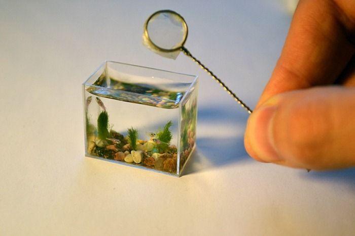 teeny tiny aquarium with little fish