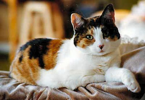 Black And White Cat Cute Cat Names Black And White Kittens